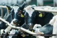 """В Оршанском районе после реконструкции открылась молочно-товарная ферма """"Стайки"""""""