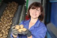 Богатый урожай картофеля вырастили в Толочинском районе (03.09.2019)