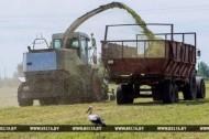 Гаспадаркі прыступілі да масавай нарыхтоўкі травяных кармоў (13.06.2017)